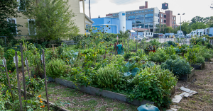 Walnut Hills Community Garden